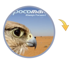 pocomail-to-outlook-icon